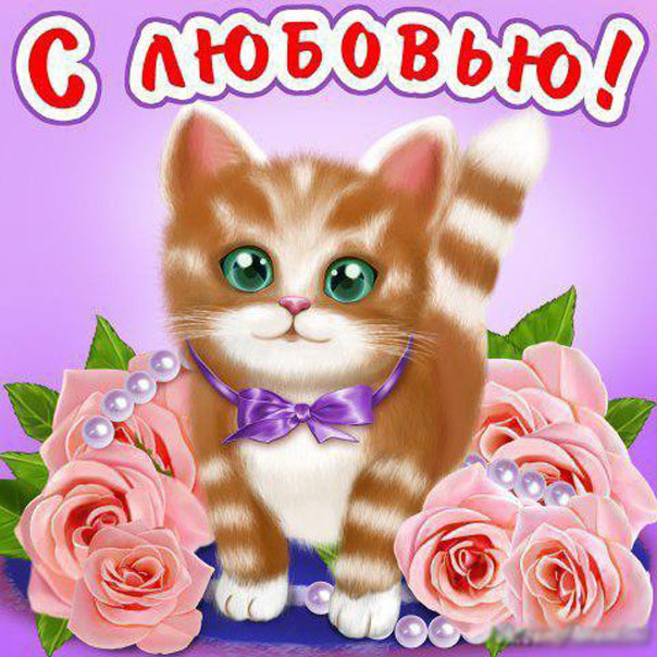 Открытка я люблю тебя котик